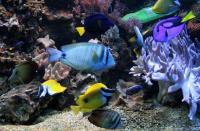 Der Traum von (fast) jedem Aquarianer<br />  ein MEERESWASSERAQUARIUM