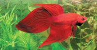 Hi Leute!!<br />  Ihr habt 1 oder mehrere 54l Aquarien???<br />  Kommt in diese Gemeinschaft und erfahrt mehr �ber euer neues Hobby!
