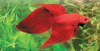 Hi Leute!!<br />  Ihr habt 1 oder mehrere 54l Aquarien???<br />  Kommt in diese Gemeinschaft und erfahrt mehr über euer neues Hobby!