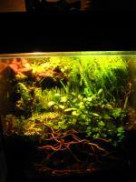 Hey ihr Lieben<br />  <br />  Diese IG ist für alle Aqua-Süchtigen, die Paludarien lieben! Meldet euch doch einfach mal an.:)