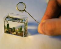 für die, die ein mini Aquarium haben